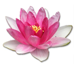 http://uklid.on-line-obchod.cz/images/obr/eurona-flowers1.jpg